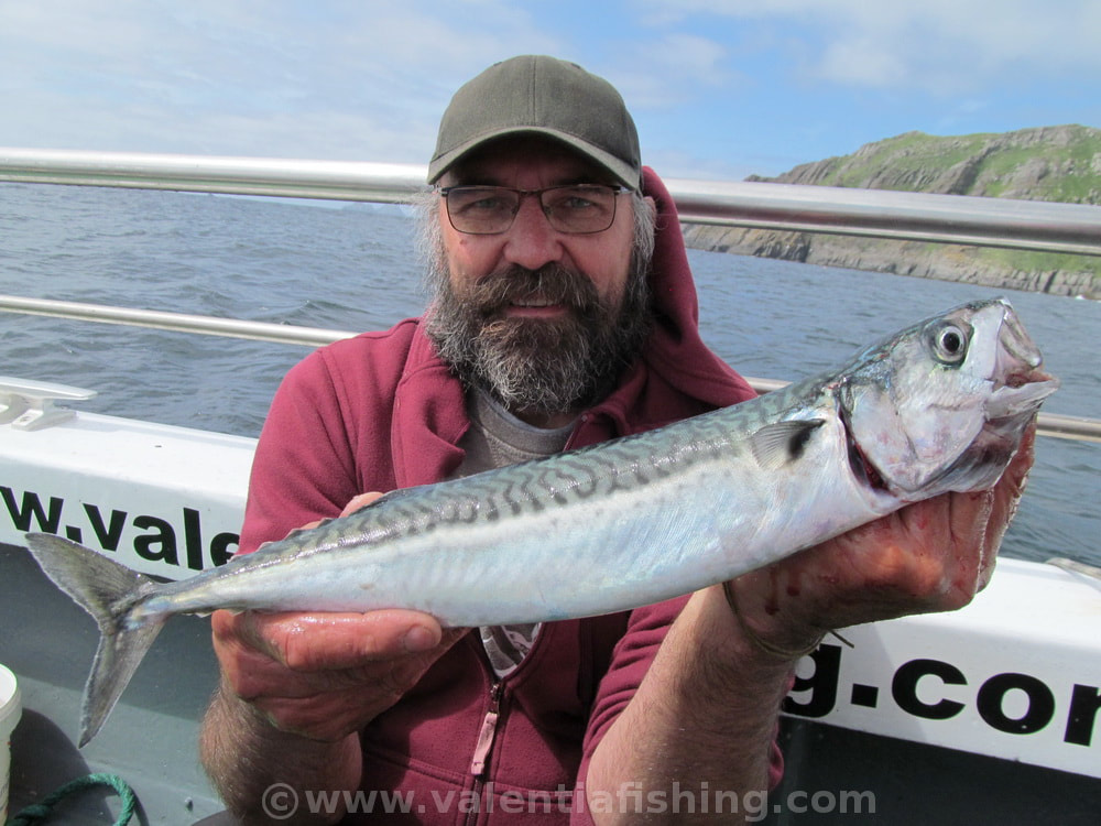 Valentia Fishing - Mighty mackerel