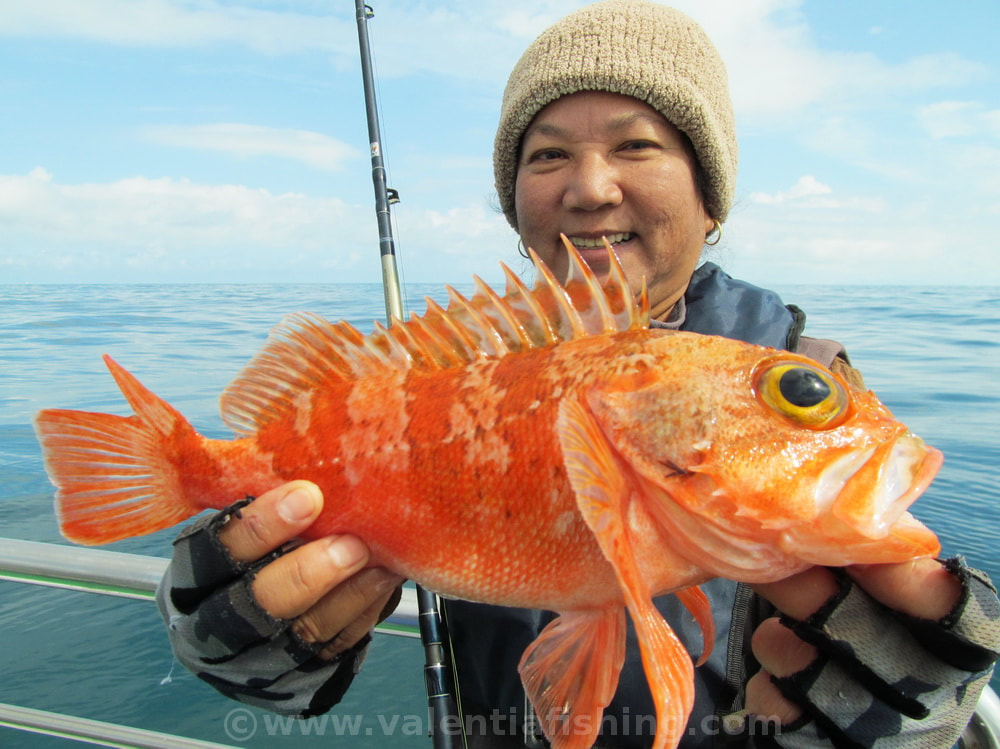 Valentia Fishing - Bluemouth specie number 33 for Tik from Thailand